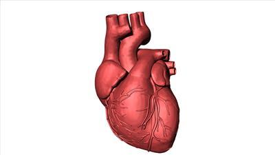 Understanding heart diseases